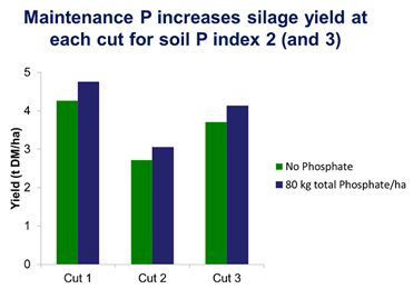 Maintenance P increases Silage yield