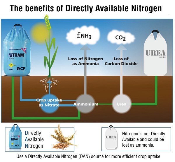 Nitram is Directly Available Nitrogen