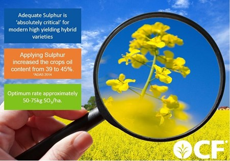Importance Of Sulphur for OSR